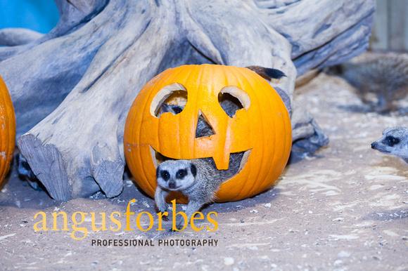 171013 019 St Andrews Aquarium PR Photography