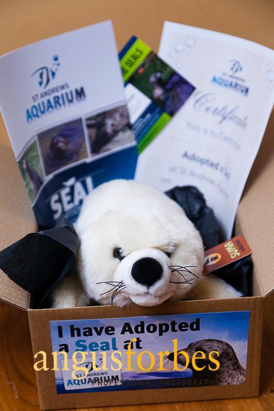 171013 037 St Andrews Aquarium PR Photography