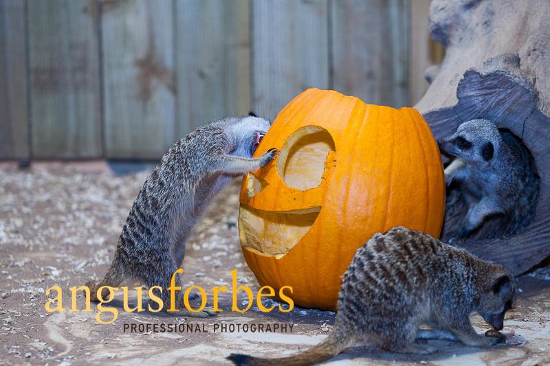171013 010 St Andrews Aquarium PR Photography