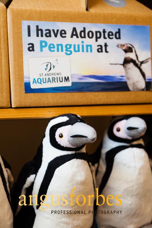 171013 035 St Andrews Aquarium PR Photography