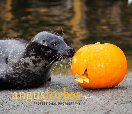 171013 032 St Andrews Aquarium PR Photography