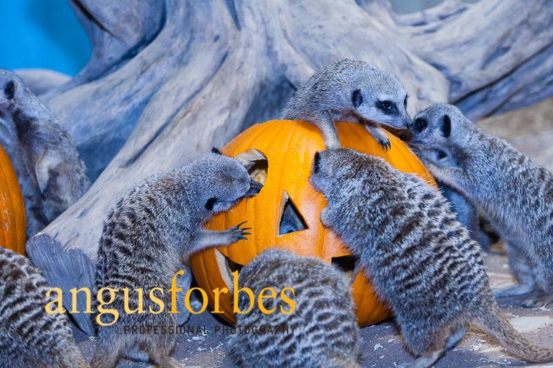 171013 013 St Andrews Aquarium PR Photography